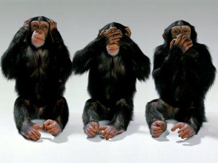 Maymun deneyi