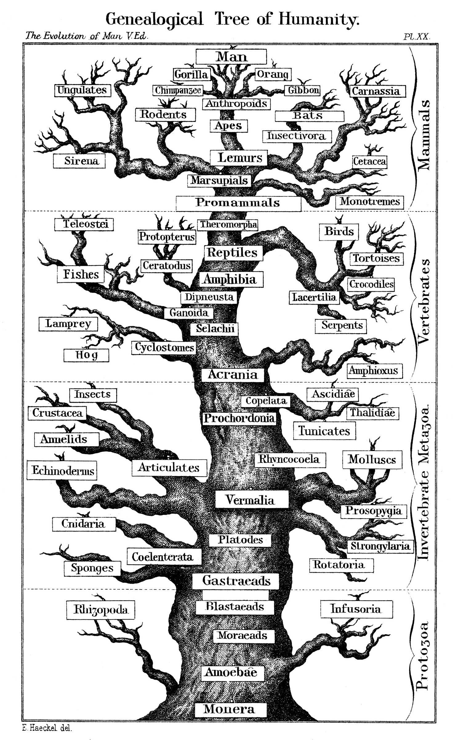 MAZın detaylı analizi: dizilim