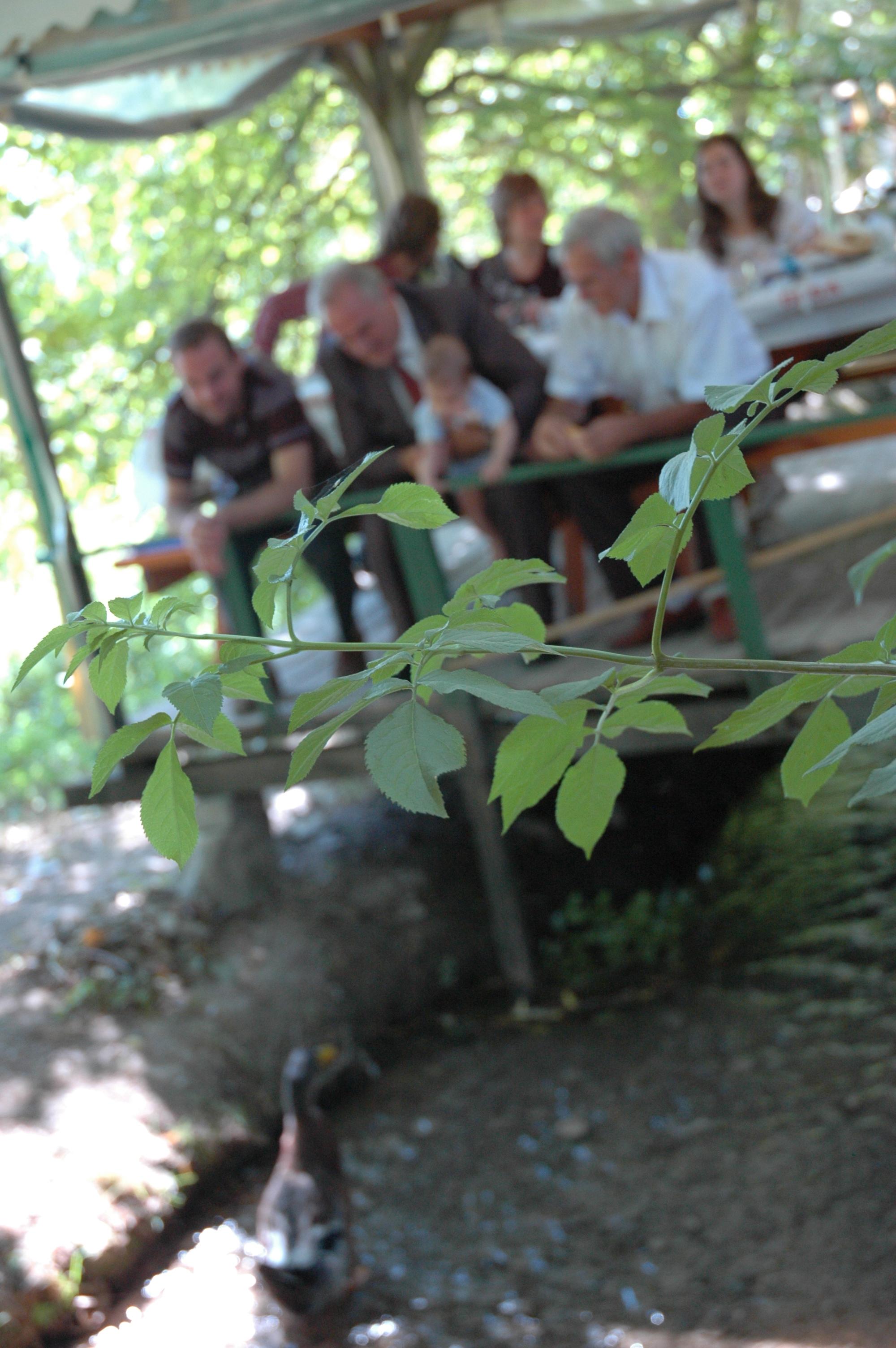 Doğa restaurant vize pazarlı köyü